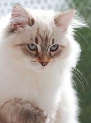 Cat Visits Southsea © Massimo Cattaneo - Fotolia.com