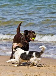 Dog Walking Service Southsea & Portsmouth © Hubert26 - Fotolia.com