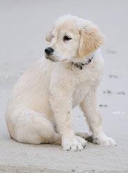 Puppy Visits Southsea © vipaladi - Fotolia.com